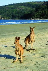 Dremaroo Reiseveranstalter - Cape Hillsborough (Foto: thanxs to Tourism Australia and Tourism Queensland)