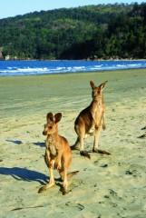Dremaroo Reiseveranstalter - Cape Hillsborough (Foto: thanxs to Tourism Australia and Tourism Queensland)
