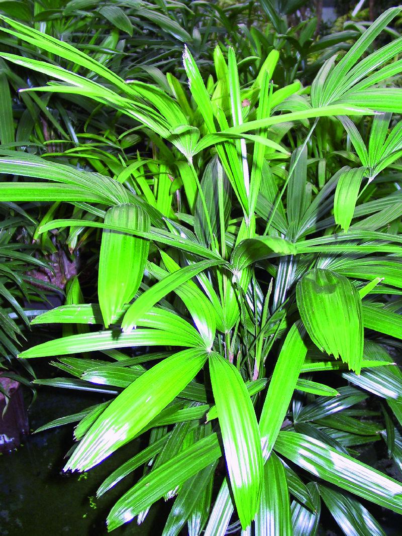 Wolfgang M. Plattner – Prima Klima mit Pflanzen