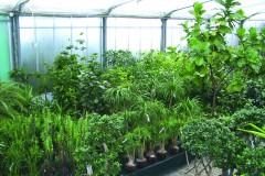 GKR Paradies Pflanzen
