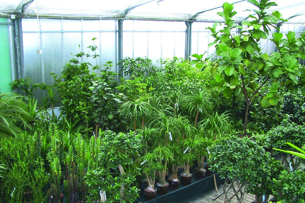wohlf hlpreis lagerverkauf outletstore in m nchen top On hydrokulturpflanzen shop