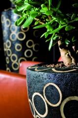 GKR mit Pflanzen Wohnen 1