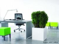 Pflanzen beleben körperlich und optisch jeden Arbeitsplatz