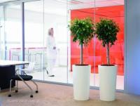 Bereits eine einzelne Pflanze am Arbeitsplatz wirkt beruhigend und verschönert den Raum