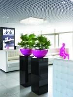 Stylisch und beeindruckend stehen hier die Pflanzen im Raum