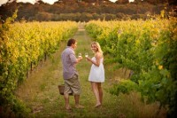 Vineyard romance LR wb